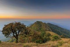Trees on hight mountain Stock Image