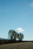 Trees on highway, blue sky, Utah. The trees along highway among the plain in desert area of Utah with white cloud and bright blue sky on sunshine day in vertical Royalty Free Stock Photo