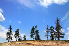 Trees in the hill Royalty Free Stock Images