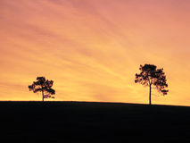 Trees on hill. Trees on ridge isloated against sky Stock Image