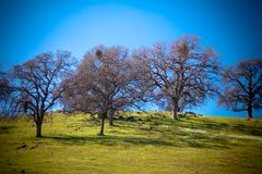 Trees on hill Stock Image