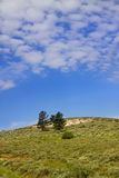 Trees on the hill Royalty Free Stock Photos