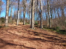 Trees on the hill. Clear blue sky,forest stock photos