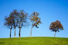 Trees on hill Stock Photo