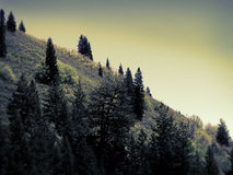 Trees on a Hill Royalty Free Stock Photos