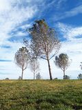 Trees on a hill. In a sunny day Royalty Free Stock Images
