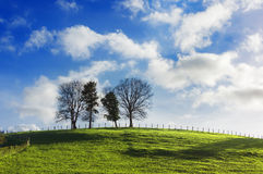 Trees on a hill Stock Image