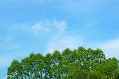 Trees on hill against a bright blue sky Stock Photo