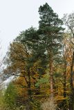Trees on a hill in autumn. Travels. Europe Stock Image