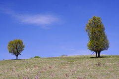 Trees, hill and blue sky Royalty Free Stock Image