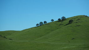 Trees on The hill with blue sky Royalty Free Stock Image