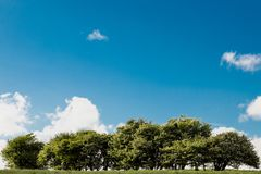 Trees on hill with blue sky and clouds on a sunny day stock photography
