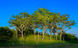 Trees Hill Blue Sky Stock Images