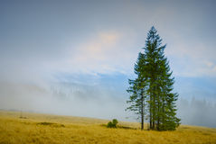 Trees on a hill Royalty Free Stock Photography