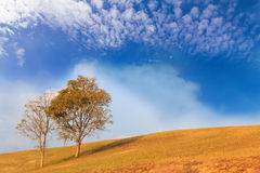 Trees on hill with cloud and sky Royalty Free Stock Image