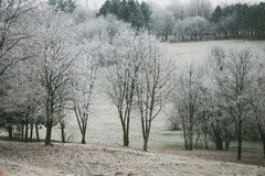 Trees and hill covered with frost Royalty Free Stock Photography