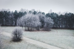Trees on a hill covered with frost Royalty Free Stock Images