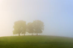 Trees on a hill on foggy morning Royalty Free Stock Image