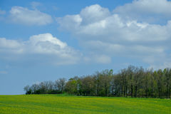 Trees on hill. Trees on green hill on blue sky Royalty Free Stock Photo