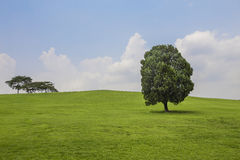 Trees on the hill with green grass Royalty Free Stock Images