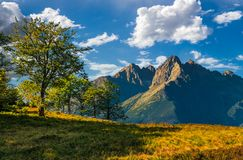 Trees on the hill in High Tatry Mountain ridge. Composite image with trees on a grassy hill in High Tatry Mountain ridge. wonderful summer landscape on a sunny royalty free stock photography