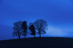Trees on a hill at night Royalty Free Stock Photo