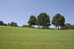 Trees on Hill in Park Royalty Free Stock Image