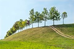 Trees on hill with path. In sunny day with blue sky Stock Images