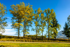 Trees on a hill side near the mountain road. Few trees on a hill side meadow near the mountain asphalt road royalty free stock images