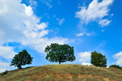 Trees on hill in summer Royalty Free Stock Image