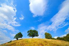 Trees on hill in summer Royalty Free Stock Photography