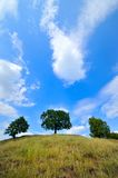 Trees on hill in summer Stock Photo
