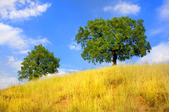Trees on hill in summer. And beautiful sky Stock Photos