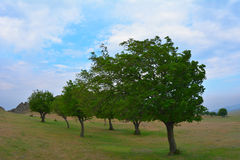 Trees on hill in summer Royalty Free Stock Photo