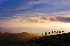 Trees on hill at sunset Stock Photo