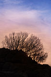 Trees on the hill at sunset. Silhouette of trees on the hill at sunset Stock Photography