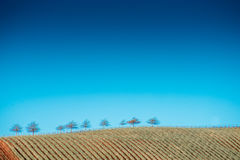 Trees on Hill Top Royalty Free Stock Photography