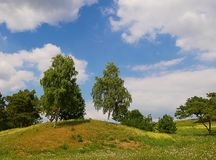 Trees on hill top Stock Image