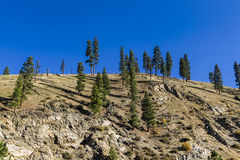 Trees on a hill top. Royalty Free Stock Images