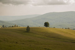 Trees on hill Royalty Free Stock Image