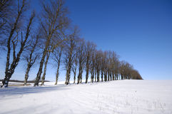 Trees on hill at winter Royalty Free Stock Photos