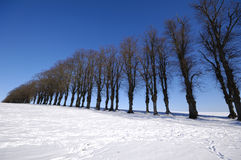 Trees on hill at winter Royalty Free Stock Images
