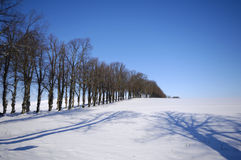 Trees on hill at winter Stock Images