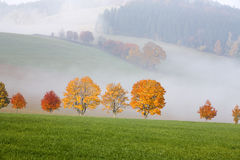 Trees in the hills landscape scenery Royalty Free Stock Images