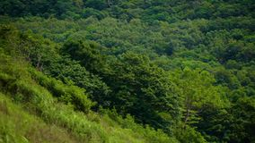 Trees on hills (Primorye). Beautiful footages for your eyes stock video