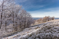 Trees on hills at winter. Blue sky stock image