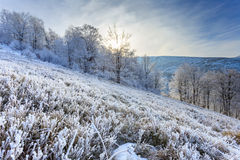 Trees on hills at winter. At dusk Royalty Free Stock Photography
