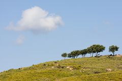 Trees on hillside Stock Photography