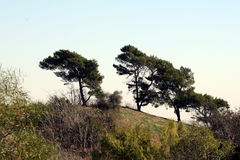 Trees on hillside. Scenic view of trees on hill in countryside Stock Images