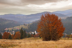 Trees on the hillside autumn. In Transylvania Royalty Free Stock Photos